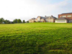 Un terrain vide avec une pelouse verte