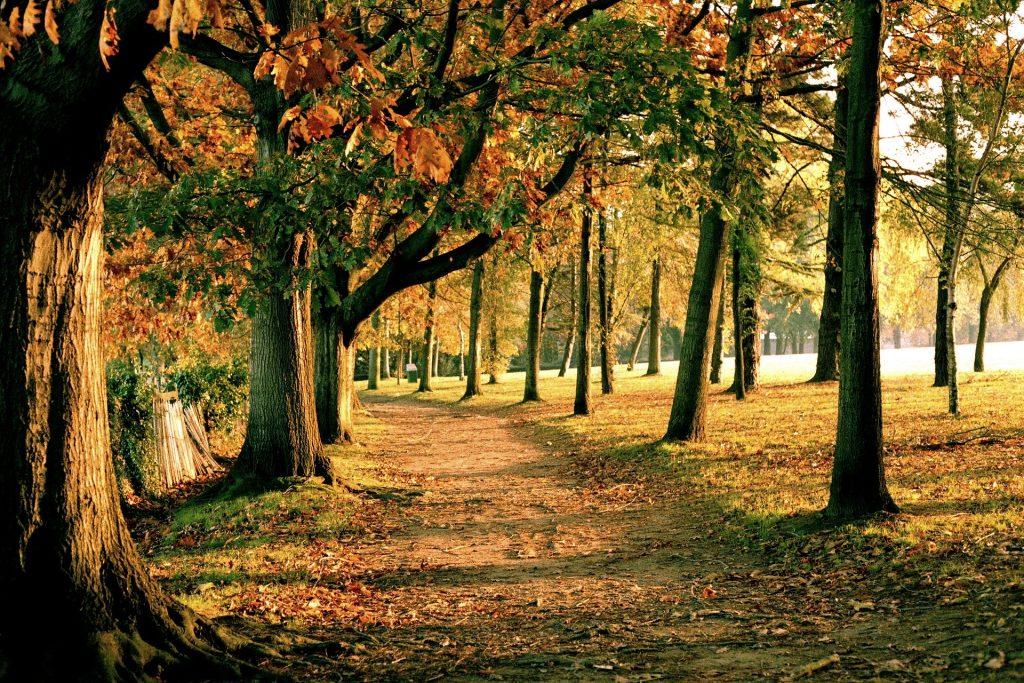 Une forêt en automne autour de Nantes
